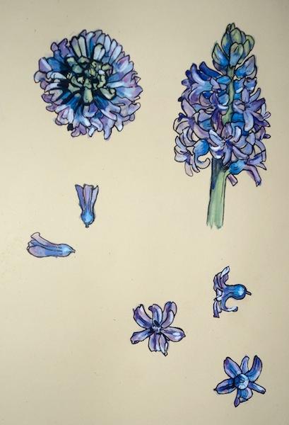 hyacinth6-1
