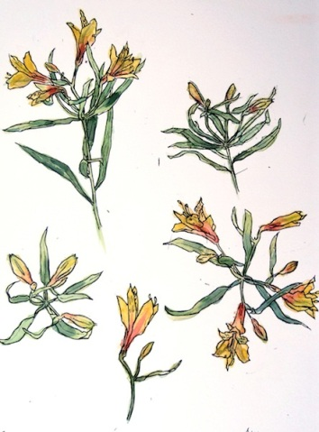 astroemeria1-1