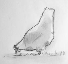 Høne1
