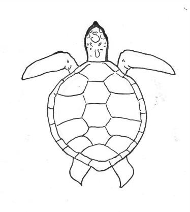 Skildpadde.JPG