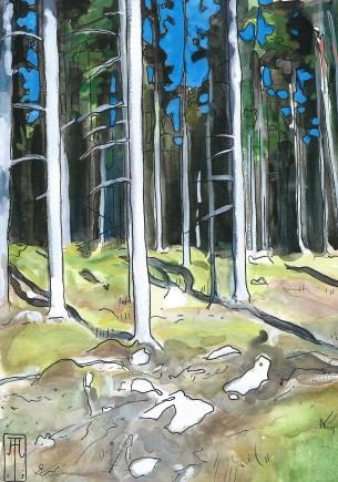Sol i svensk skov